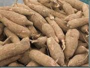 Starchy root vegetable, cassava root