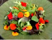 Using Nasturtium to Decorate Green Salad