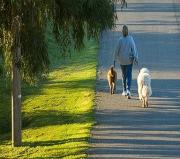 Morning walking with pet