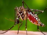 Mosquito Virus Outbreak Hits America