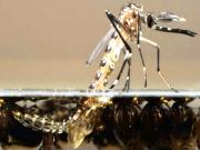 Millions Of Gmo Mosquitoes To Be Set Loose In Florida Keys