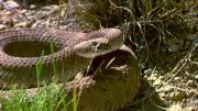 How To Survive A Snake Attack 10035904 By Videojug