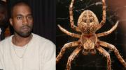 Kanye Wests Secret Terror A Paralyzing Fear Of Spiders