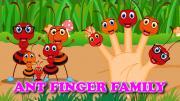 Ant Finger Family
