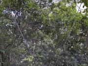 Zipline Through The Amazon With Google Street View
