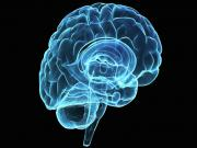 Dementia Stopped In Mice Brains
