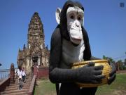 Exploring Monkey Temple In Lopburi Thailand