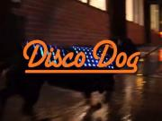The Disco Dog Led Vest Is Louder Than Your Dogs Bark