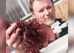 New Seaweed Tastes Just Like Bacon And Is Healthier Than Kale