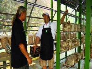 Lawai Mushrooms Farm