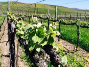 5 Facts Wine Drinkers Need To Know About The Drought Wine Tv