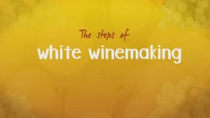 How White Wine Is Made 4 Steps