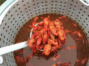 How To Steam Crawfish 1015387 By Smokyribs
