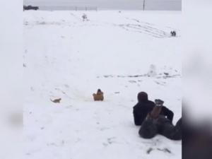 Derick Dillard Appears To Sled Over A Cat As Duggar Family Cheers