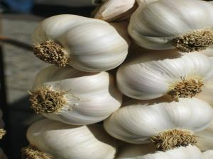 Seasons - Garlic