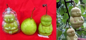 Spiritual Fruit - The Buddha Pear…!!