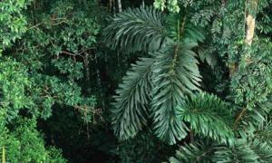 Vegetables in rainforest
