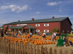 Betty's Trip to Boyd's Orchard to Pick Out Pumpkin with Family