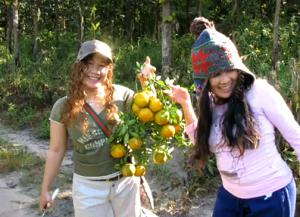 Picking Oranges on Ning's Cousine's Farm