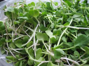 Sprouts the Living Superfood for Superhealth