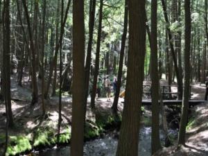 Yoga, Nature, Yoga & Health Retreat in the Poconos (near NYC)