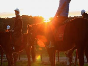 Horseback Winery Tour, Mornington Peninsula Melbourne Australia