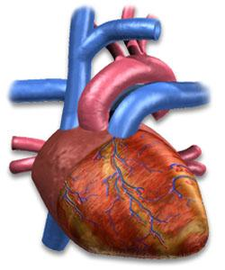 high cholesterol does not lead to stroke
