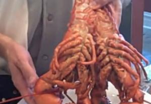How To Boil A Live Maine Lobster