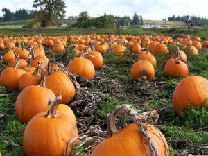 Great Pumpkin Recipes and Tips from The Produce Lady