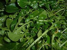 Watercress are important for good health