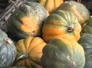 Ideas to Cook Butternut Squash