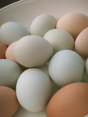 Eggs are rich source of Vitamin A