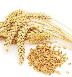 Grain Full Diet