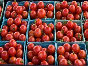 Tomato Canning Basics