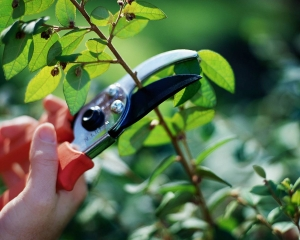 Pruning your own plants