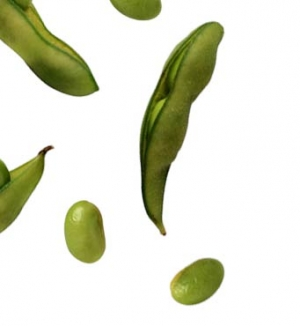 Soy is Not Good for Health