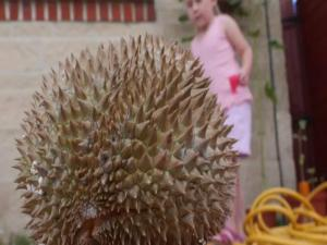 Durian Fruit Food Fear