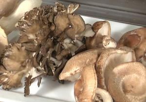 4 Step Mushroom