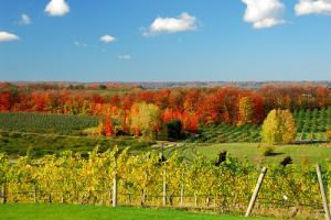 Michigan Wine Tour