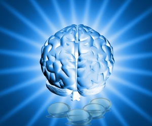 Super Foods For The Brain