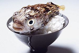 Fugu- Japan's delicacy, is the most deadliest food in the world
