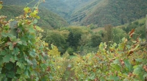 Wines in Romantic Germany - The Rhineland-Palatinate