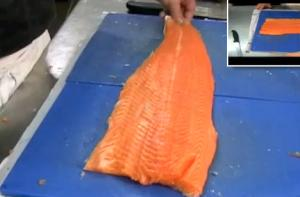 Fillet Fresh Salmon Part 2