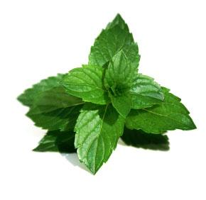 Mint leaves are known for the abundant health benefits.