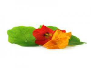 Selecting and Using Nasturtium