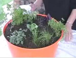 About Herb Container Gardening