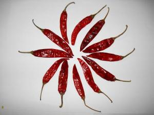 Red dry chili pepper