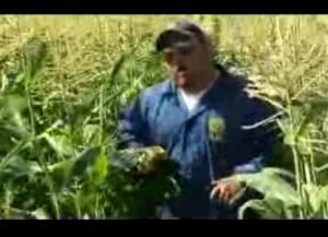 Ewa Sweet Corn-Aloun Farms Review