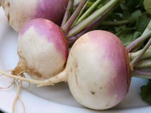 Seasons - Turnips