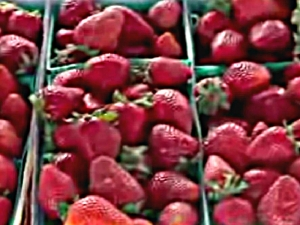 Farmers' Market Interview: Stretching Your Dollar